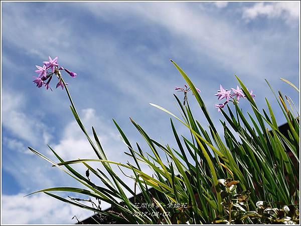 2012-08-紫嬌花2