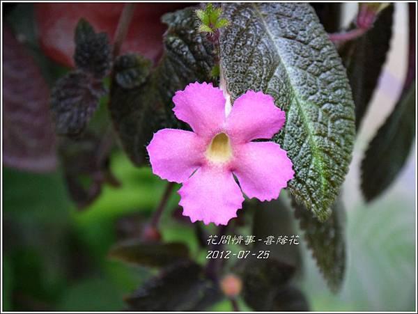 2012-08-嘉蔭花1