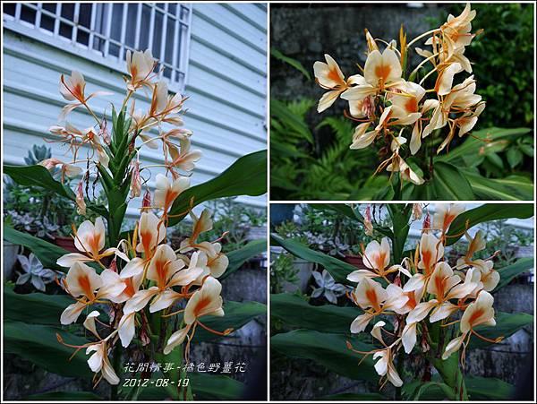 2012-08-橘色野薑花1