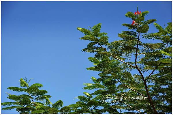 2012-09-希望之樹鳳凰木10