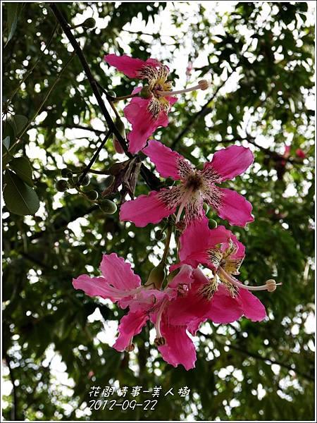 2012-09-美人樹12
