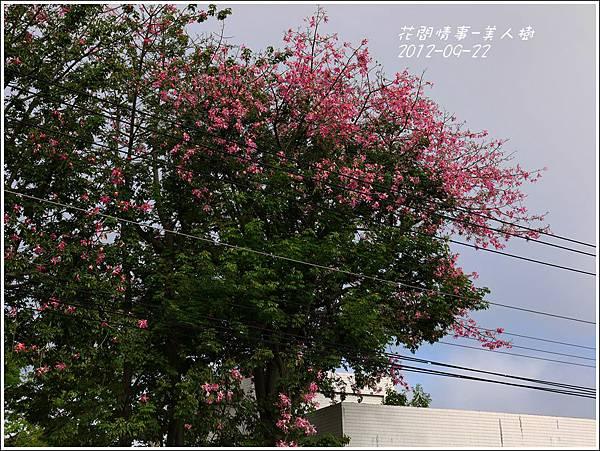 2012-09-美人樹1