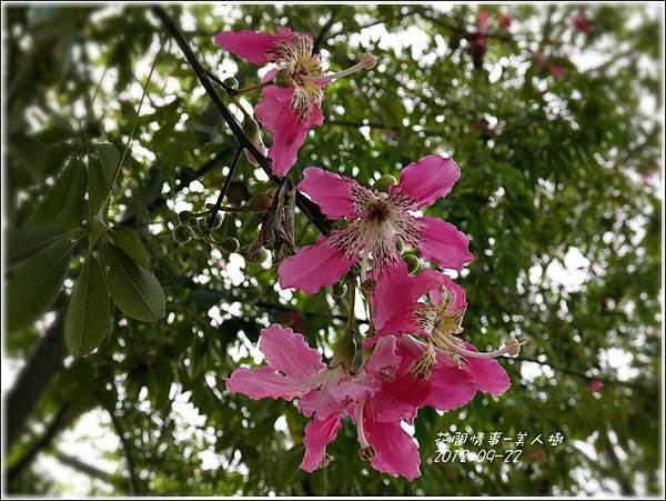 2012-09-美人樹3