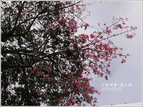 2012-09-美人樹4