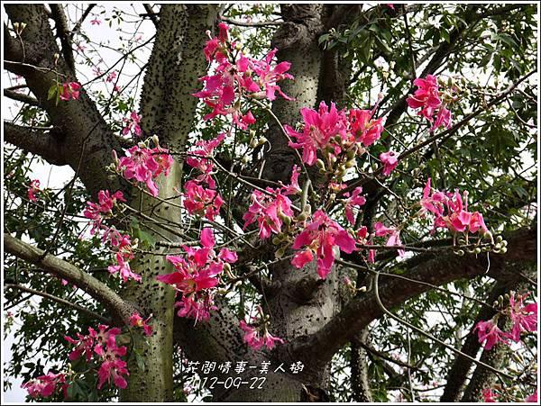2012-09-美人樹6