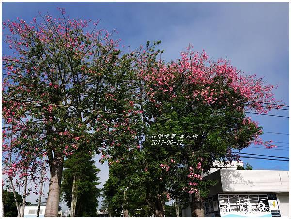 2012-09-美人樹7