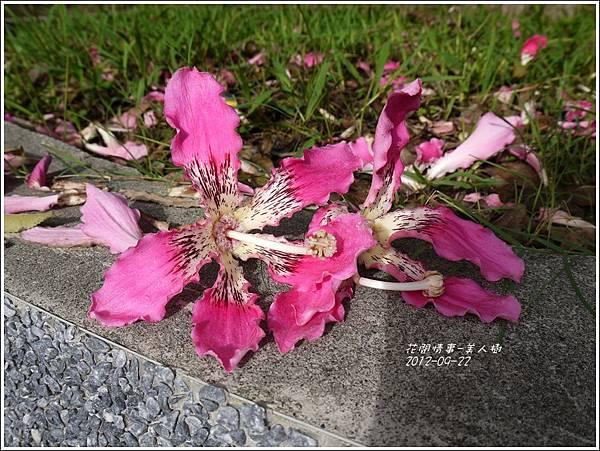 2012-09-美人樹9