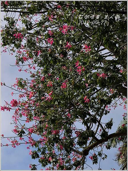 2012-09-美人樹11