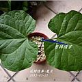 2012-09-魔豆4