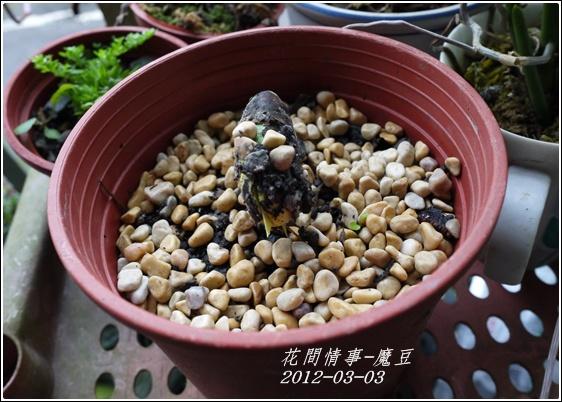 2012-03-魔豆3
