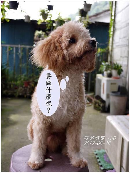 2012-09-小Q過中秋1