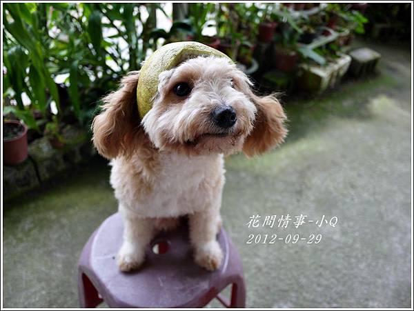 2012-09-小Q過中秋5