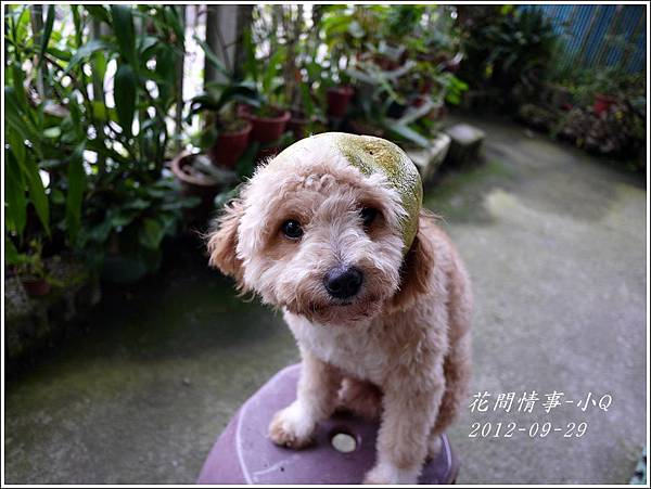 2012-09-小Q過中秋4