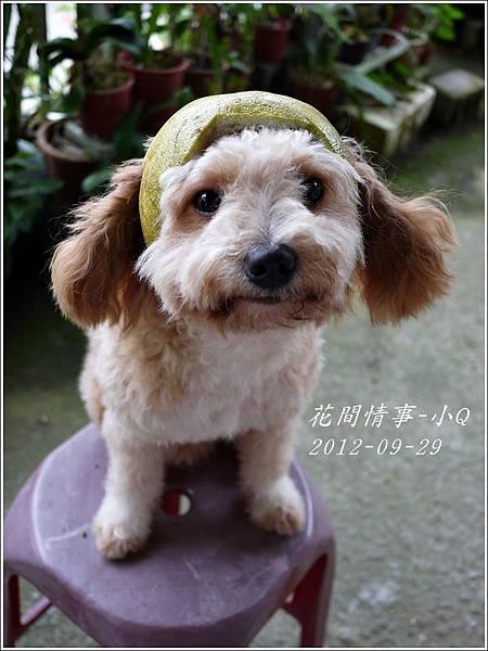 2012-09-小Q過中秋8