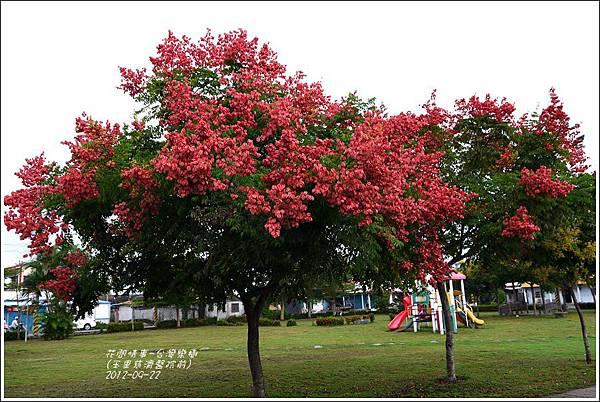 2012-09-台灣欒樹1