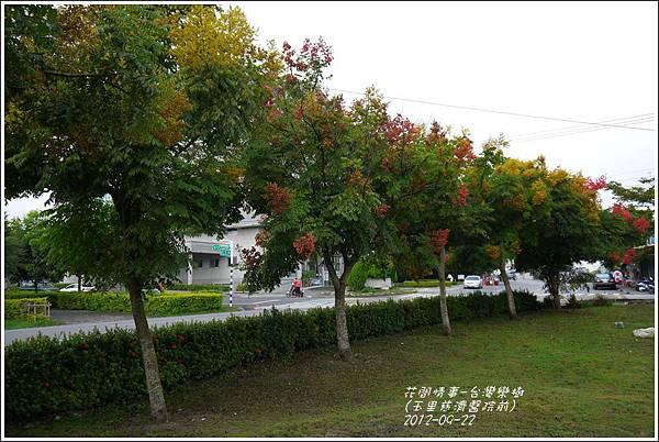 2012-09-台灣欒樹2