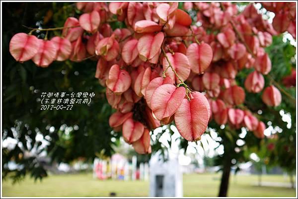 2012-09-台灣欒樹4