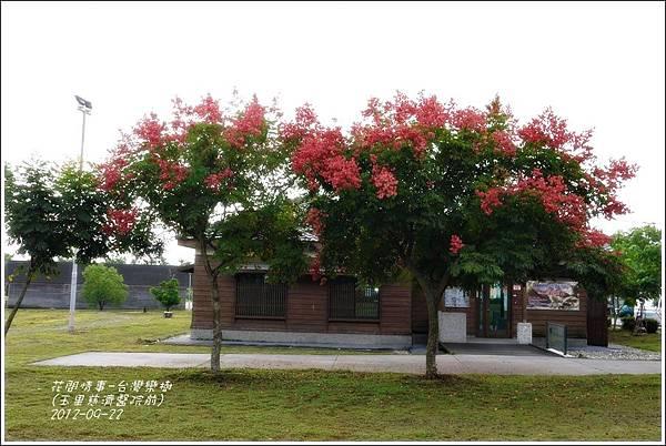 2012-09-台灣欒樹5