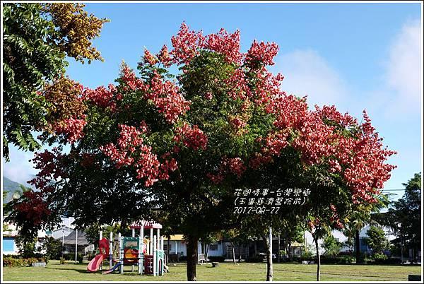 2012-09-台灣欒樹13