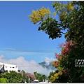 2012-09-台灣欒樹15