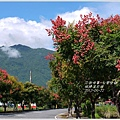 2012-09-台灣欒樹17