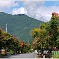 2012-09-台灣欒樹20