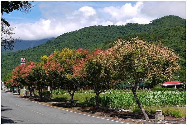 2012-09-台灣欒樹22
