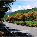 2012-09-台灣欒樹23