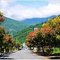 2012-09-台灣欒樹24