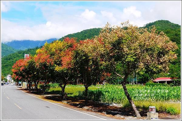 2012-09-台灣欒樹25