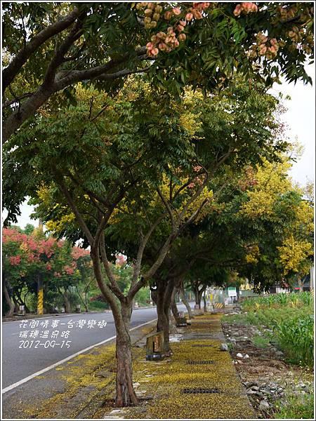 2012-09-台灣欒樹27