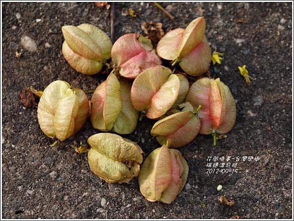 2012-09-台灣欒樹29