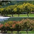 2012-09-台灣欒樹30