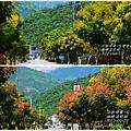 2012-09-台灣欒樹31