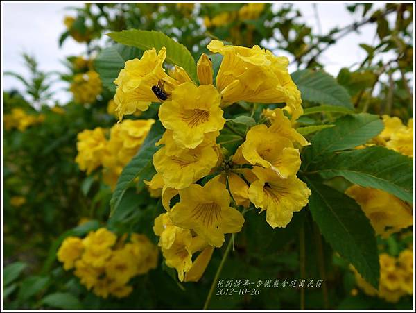 2012-10-香榭麗舍庭園民宿14