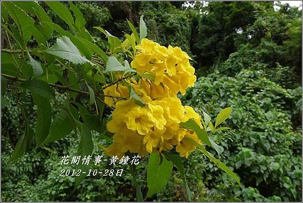 2012-10-黃鐘花10