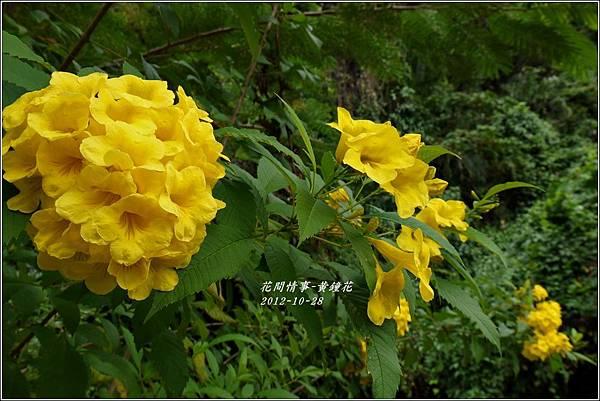 2012-10-黃鐘花2