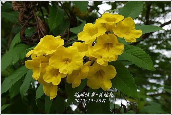 2012-10-黃鐘花5