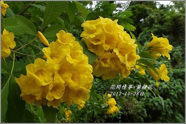 2012-10-黃鐘花7