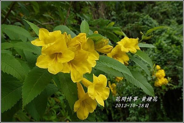 2012-10-黃鐘花6
