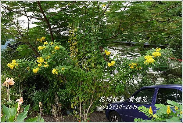 2012-10-黃鐘花8