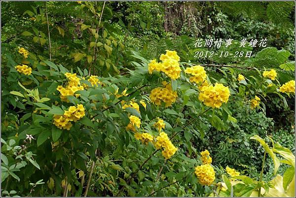 2012-10-黃鐘花9