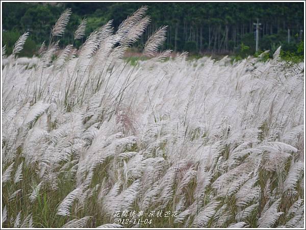 2012-11-深秋芒花1