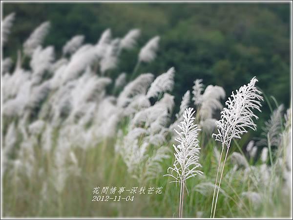 2012-11-深秋芒花7