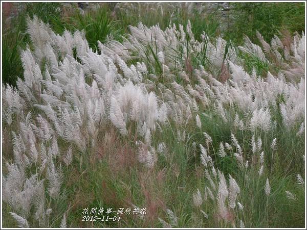 2012-11-深秋芒花16