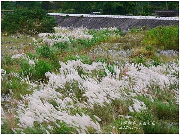 2012-11-深秋芒花23