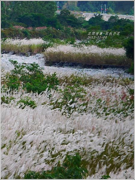 2012-11-深秋芒花25