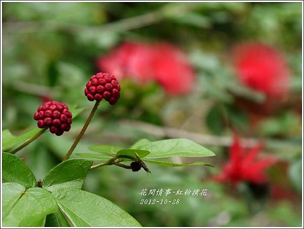 2012-11-紅粉撲花1