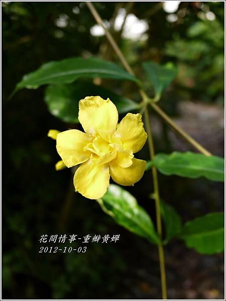 2012-11-重瓣黃嬋1