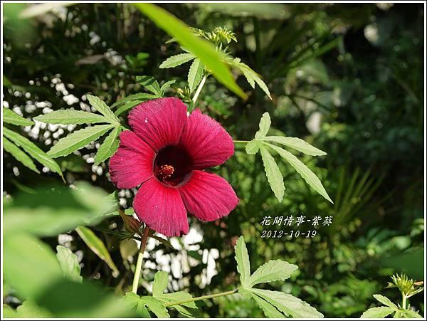 2012-11-紫葵1